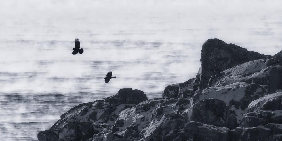 Misty Crows