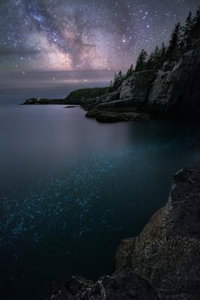 Bioluminescence Under The Stars