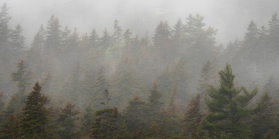 Trees in the Fog 4