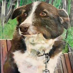 #49 THIS IS MY DOG PEPPA - Pauline Green