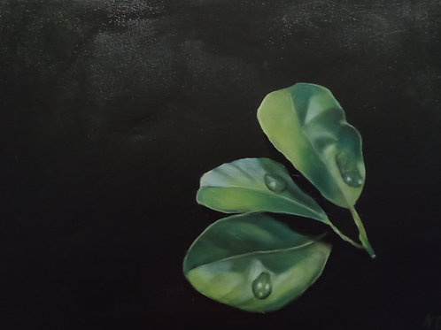 Nicola Heasley (Dawborn) | Three Lemon Leaves