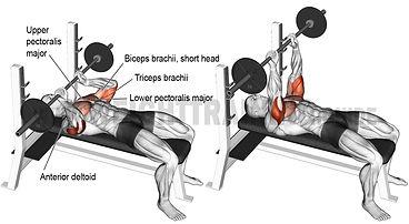 Eco Fitness Gym Life Tranig Guide 2.jpg