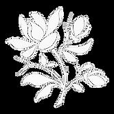 magnolia_branca.png
