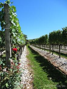 Serra Gaúcha - vinícolas tradicionais