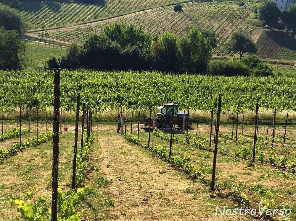 WWOOF - Trabalho nas vinhas da Toscana