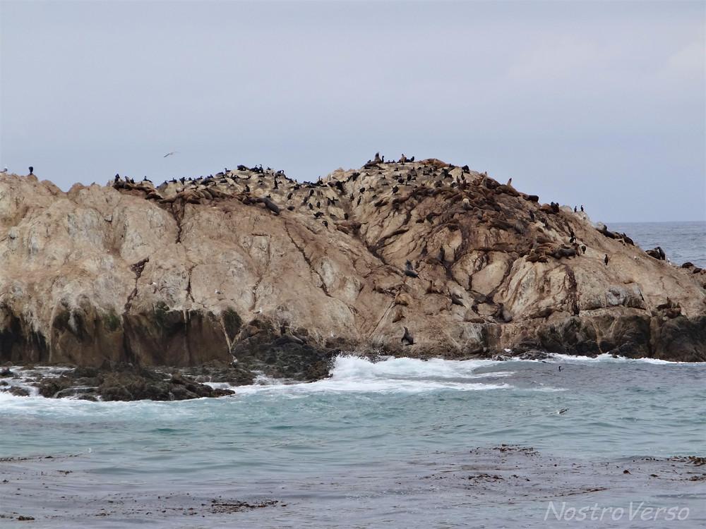 Leões marinhos em Pebble Beach