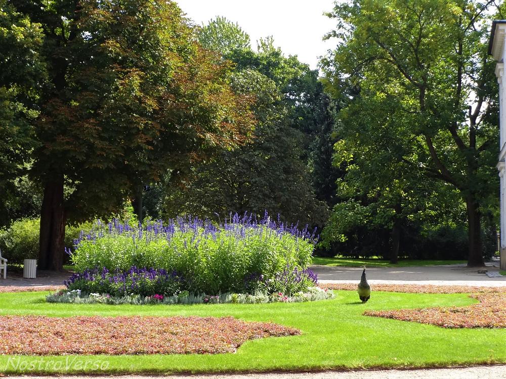 Pavão no Parque Lazienki - Varsóvia