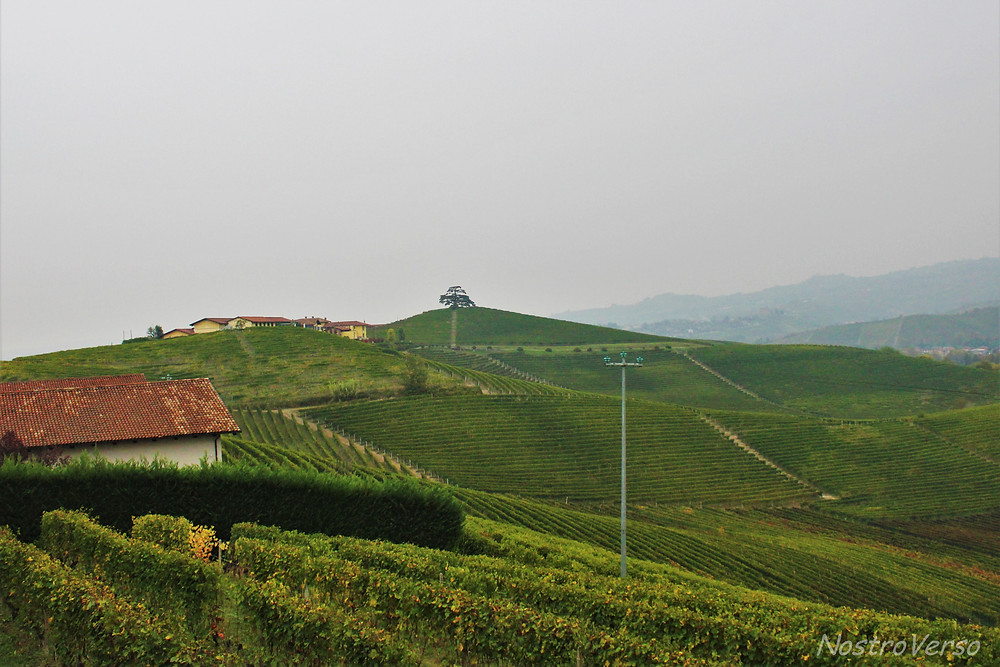 Vista para os vinhedos na Agricola Marrone