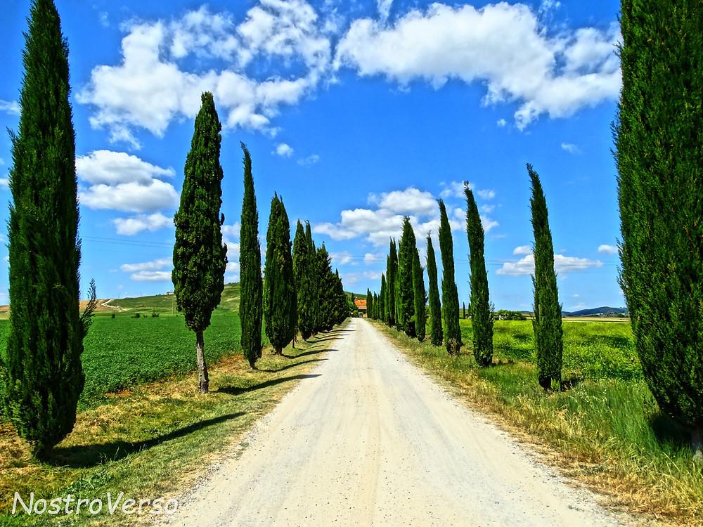Ciprestes no Val d'Orcia - Toscana