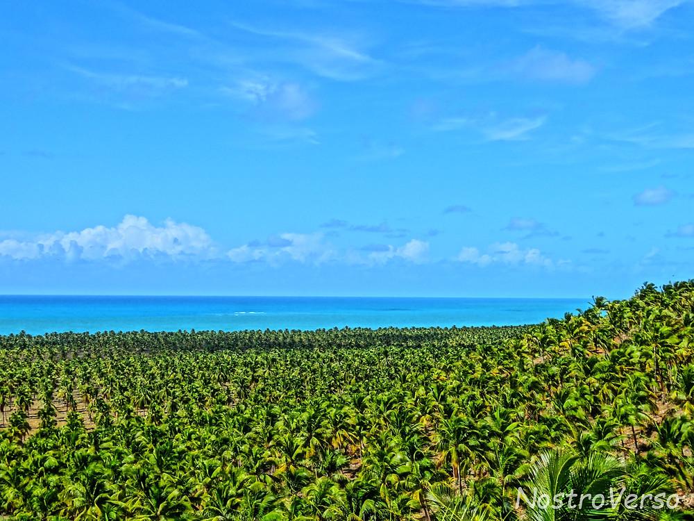 Coqueiral na Praia do Gunga