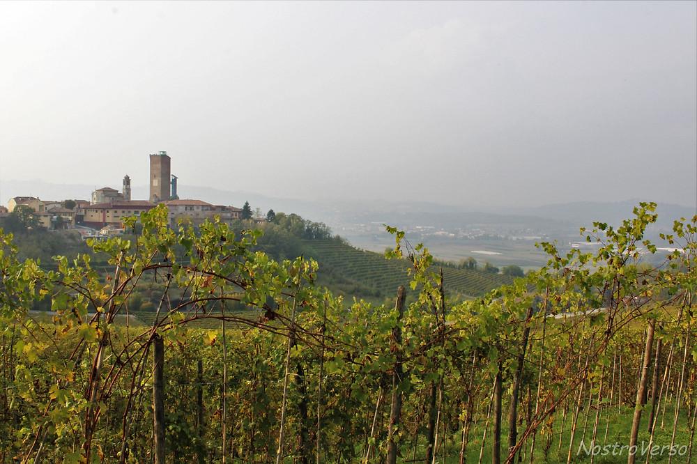 Vinhedos em Barbaresco, Piemonte