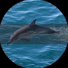 дельфин.png