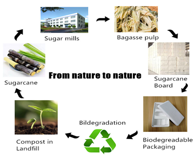 How to create biodegradable packaging from bagasse pulp