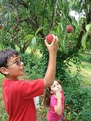 Niños escogiendo manzanas de un árbol