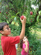 Boy and girl picking apples