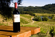 Vineyard view with wine bottle