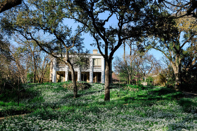 Flower Hill Wild Onions 2020