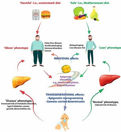 EpigeneticsEffects.png