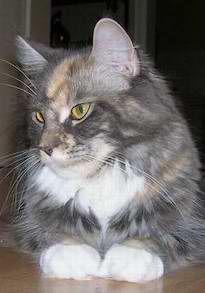 Moira_II_200607_mini.jpg