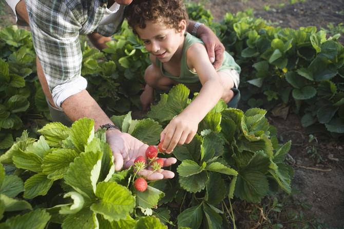 Nutrition & Obesity In Children