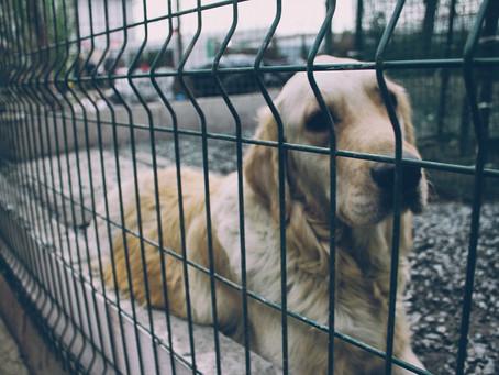 Άστεγα θα μείνουνε στο Ναύπλιο με απόφαση της περιφέρειας πάνω από 100 σκυλιά