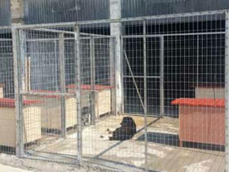 10 καυτά ερωτήματα προς τον Δήμο Ραφήνας Πικερμίου για τα παράνομα καταφύγια που υπάρχουν στον Δήμο