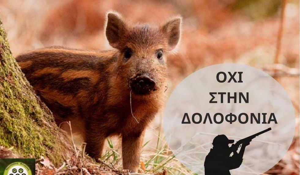Π.Φ.Π.Ο. Όχι στην δολοφονία των αγριογούρουνων!
