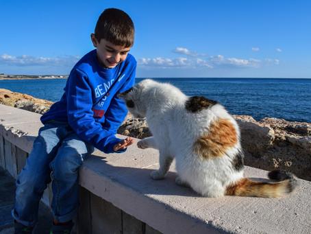 Διευκρινήσεις για όσους φροντίζουν ζώα είτε εντός του Δήμου τους είτε εκτός αυτού