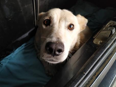Ασυνείδητος πυροβόλησε σκυλάκι στο Άργος
