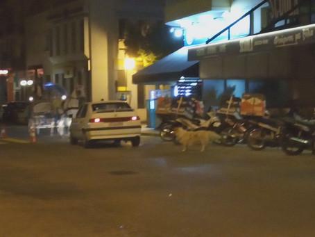 Επικίνδυνο αδέσποτο σκυλί κυνηγάει αυτοκίνητα στο λιμάνι του Ναυπλίου(Video)