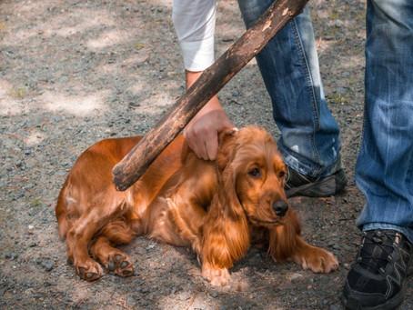 Αυτόφωρο για όποιον βασανίζει τα ζώα με εγκύκλιο του Αρείου Πάγου