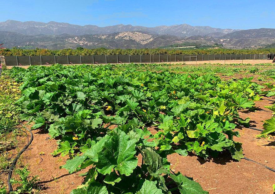 PGO Organic farming Community Garden Non Profit Carpinteria Farmers