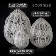 Grandezza uova