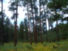 Trees San Carlos.jpg