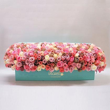 Box Rosas Multicolor