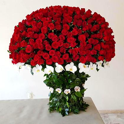 Atado rosas perfectas