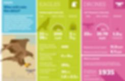 Beugism_eagles_drones_infographic.png
