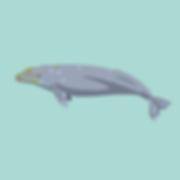 beugism_greywhale-01.png