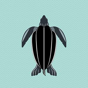 beugism_leatherbackturtle-01.png