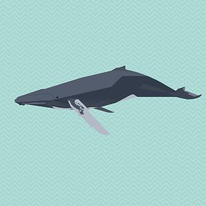 beugism_humpbackwhale-01.png