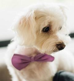 puppy-2595917.jpg