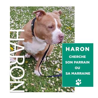 HARON