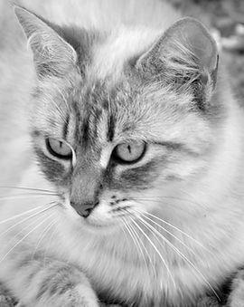 cat-2422608NB.jpg