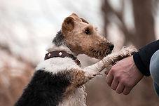 dog-3385872.jpg