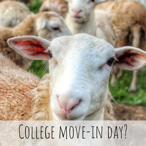 COLLEGE MOVE-IN DAY