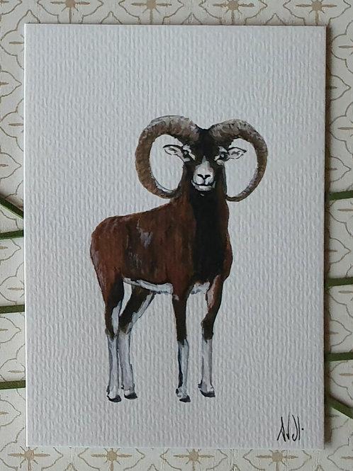 Mouflon aquarelle l'unité (10×15))