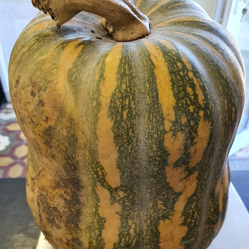 Courge 3.930 Kg