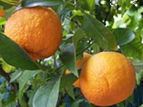 Bigarades/Oranges amères BIO (1kg)