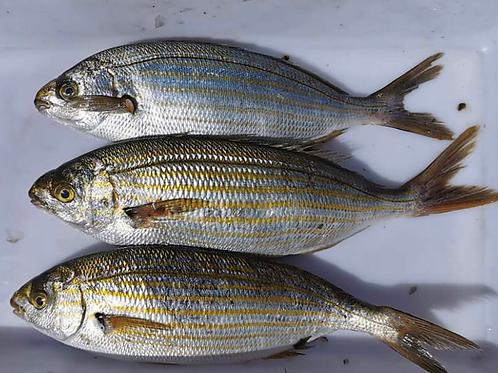 Saupe au kg pêche locale