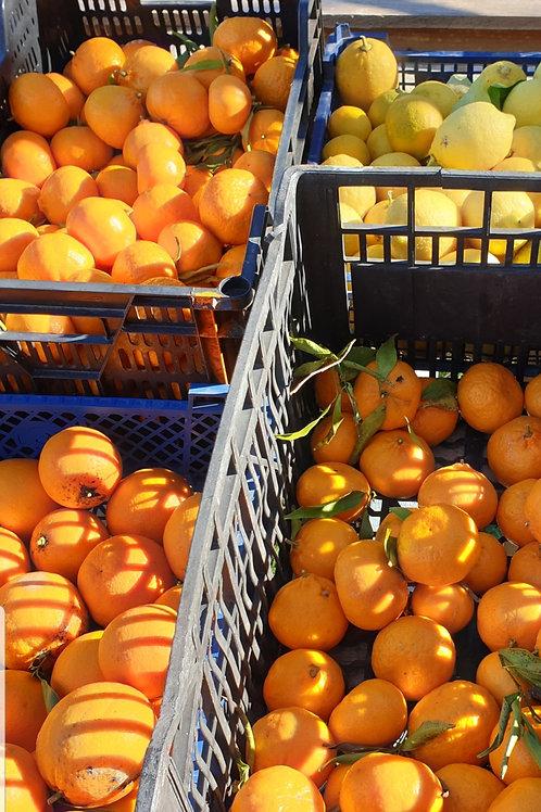 Orange Bio Mandriolu (le kilo)